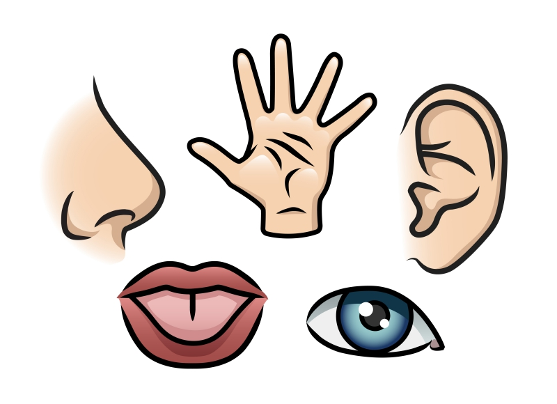 L'Importanza di Conoscere i Canali Percettivi