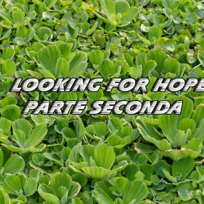 DP Looking for Hope Parte Seconda